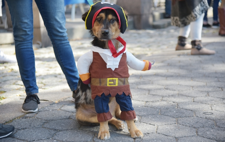 Titan dressed as a pirate for the 16th annual Battery Park City Puppy Parade. Photo Carl Glassman/Tribeca Trib & Canines Put Their Best Paw Forward in Annual BPC Costume Contest ...